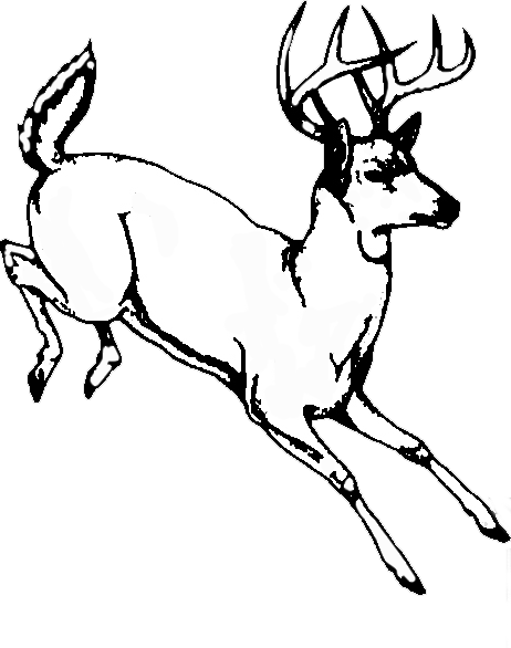 Whitetail Tree Farm logo
